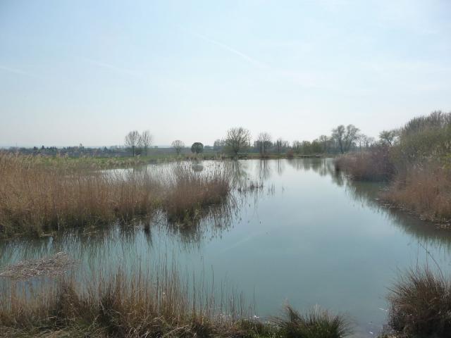 Südlicher Teich Streitsee Kölleda